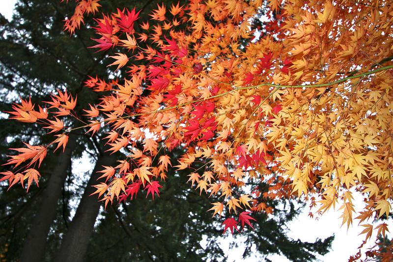 Portland Japanese Garden  11-11-11  3558.jpg