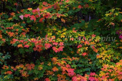 Upper Peninsula Fall Foliage