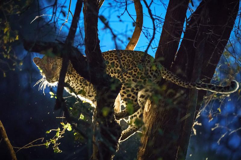 LeopardHills-20171022-1027.jpg