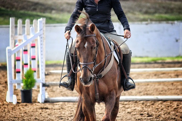 Horse Show - Santa Cruz County Fair 2013