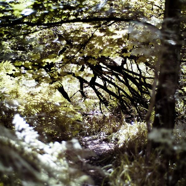Routin Lin, Milfield plain, Northumberland UK, around to the waterfall