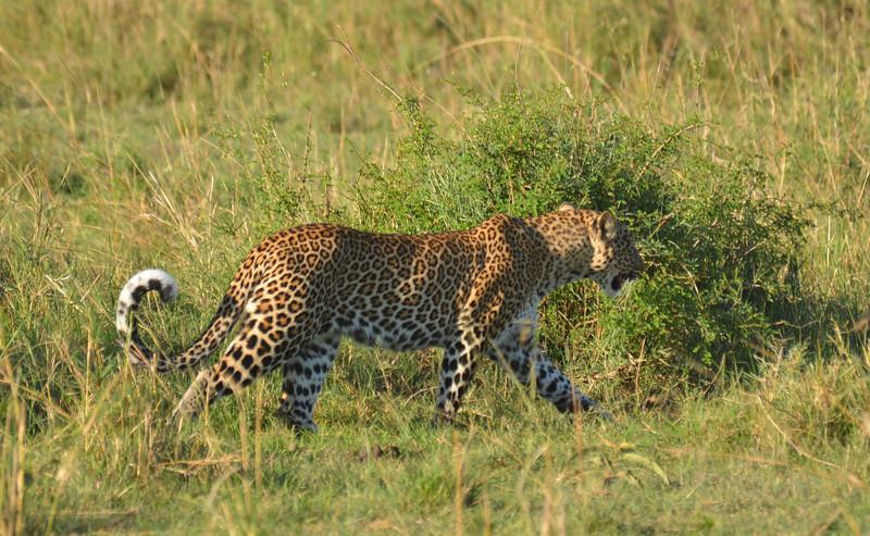 East Africa Safari 167.jpg
