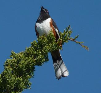 Bird-a-thon 2012