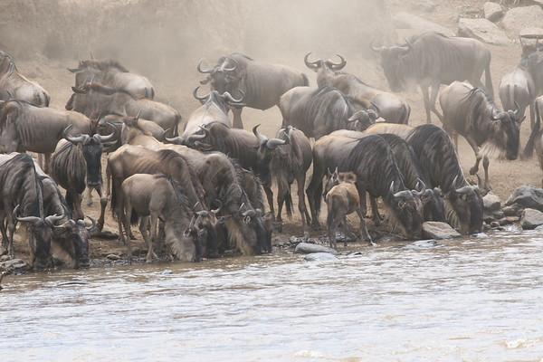 Kichwa Tembo Kenya 2006