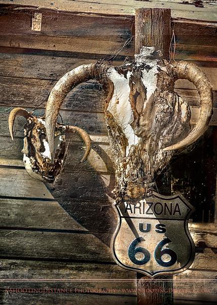 Cattle skulls drying on a fencepost along Rte.66