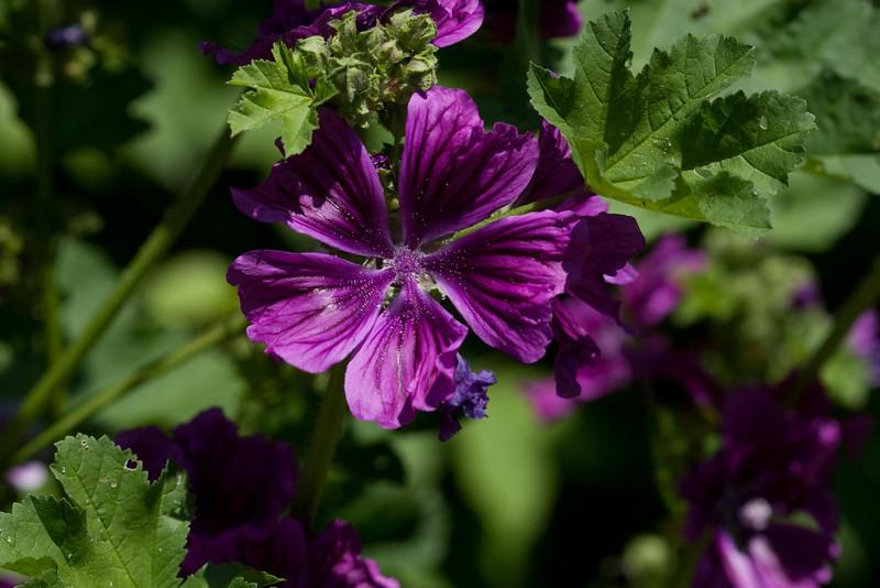 2009 06 30_NY Botanical Gardens_0662.CR2