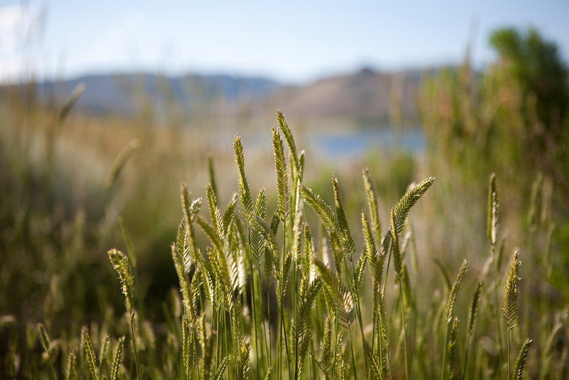 Mountain grasses
