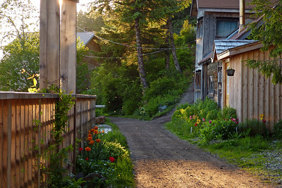 A Favorite Part of the Trail (notice the bugs lit up by the sun) June 2012, Cynthia Meyer, Tenakee Springs, Alaska