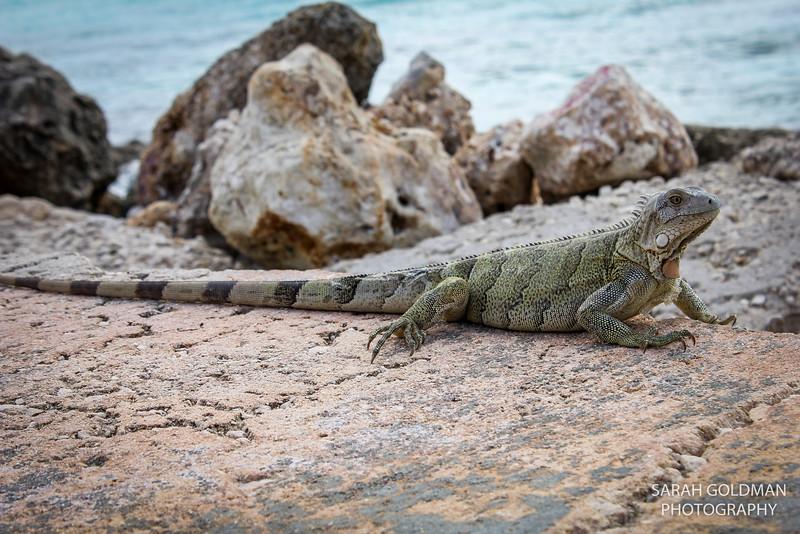 Bonaire-photography (4).jpg