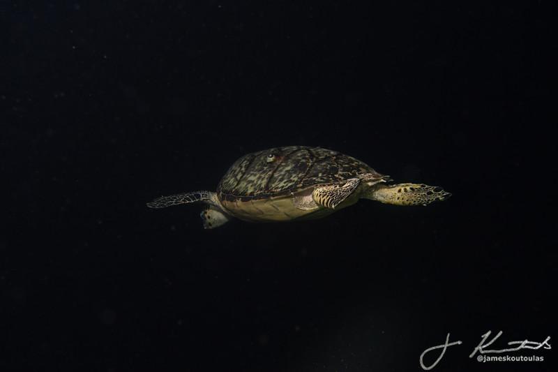 Night Dive 7-27-21