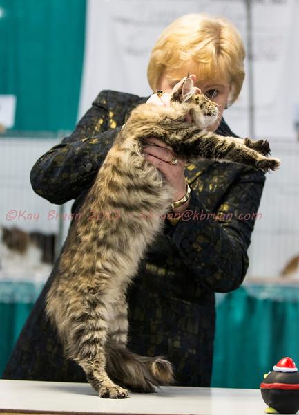 CatShow2014090.JPG