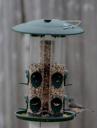 2011 Birds in Snow