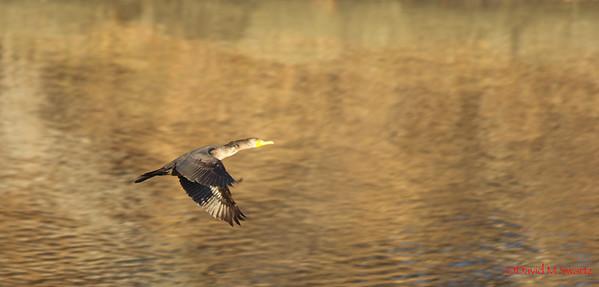 Birds & Waterfowl