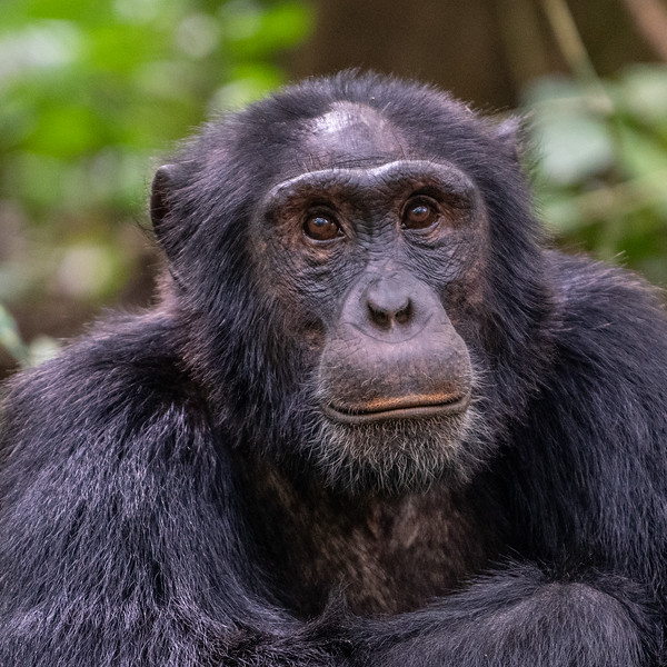 Uganda_T_Chimps-47.jpg