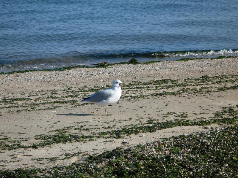 Calf Pasture Beach (16).JPG