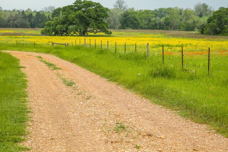 2015_4_3 Texas Wildflowers-7559-2.jpg