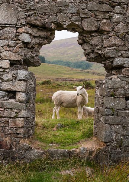 Ireland_2018_08_13_0326.jpg