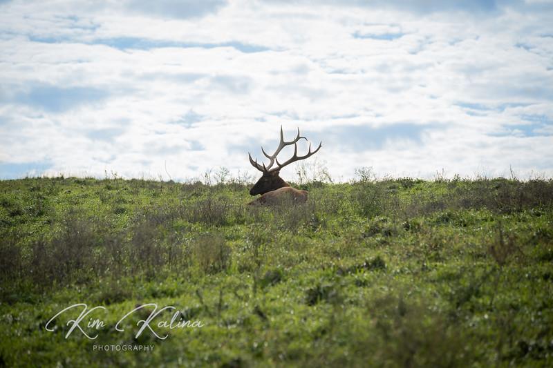 Male Elk Silhouette-05226.JPG