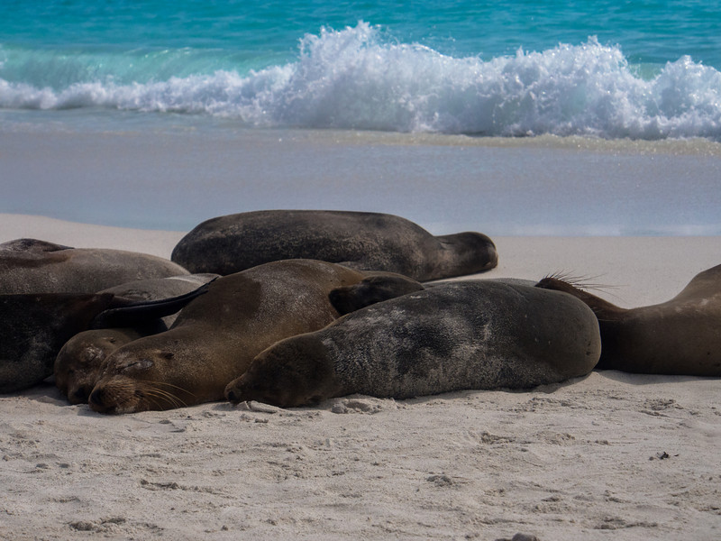seals sleeping.jpg
