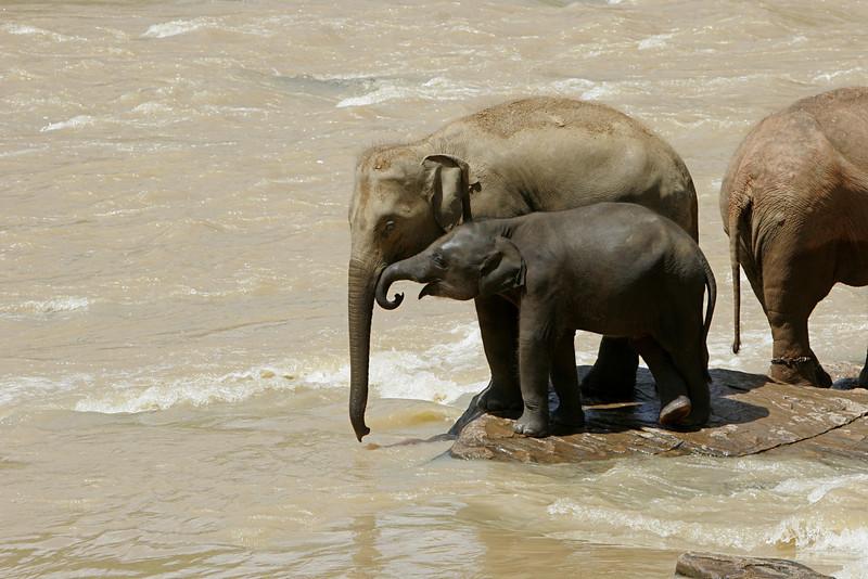 Elephant Sanctuary, Sri Lanka
