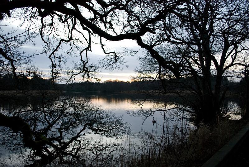 Swan through trees