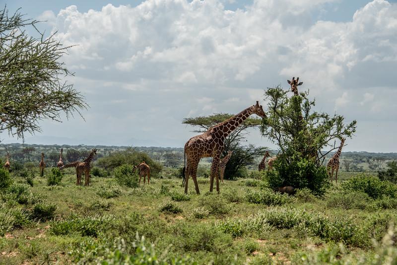 Samburu (68 of 70).jpg