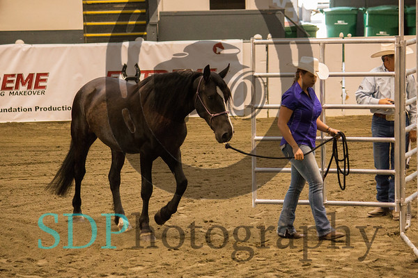 MA Extreme Mustang Makeover Adult Day 1 Handling