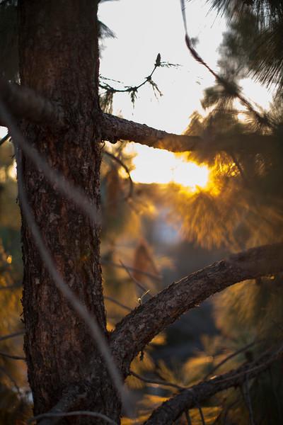California Nature
