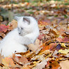 Cute kitten in leaves