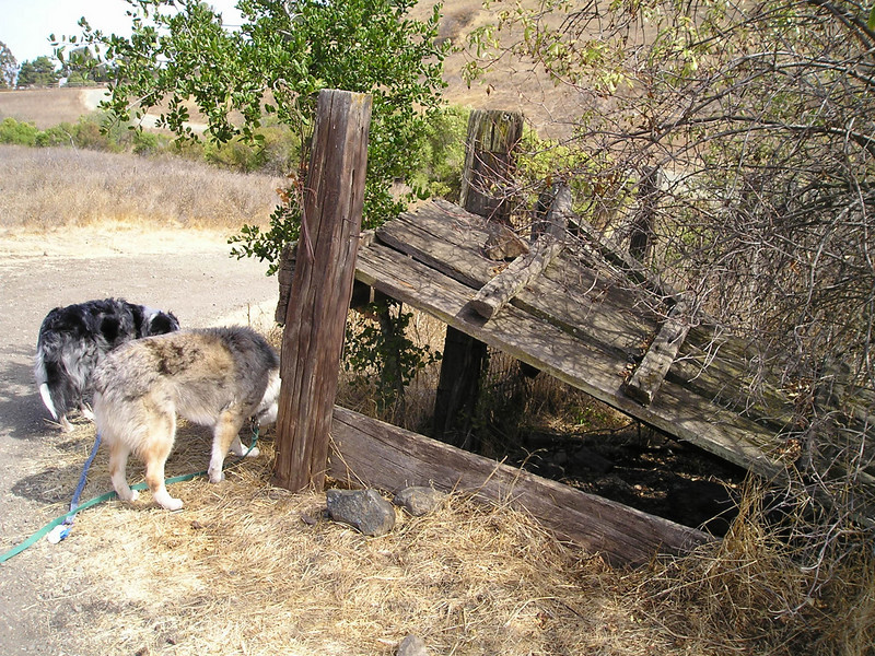 We found this interesting stile alongside the trail. Dogs found it as interesting as I did.