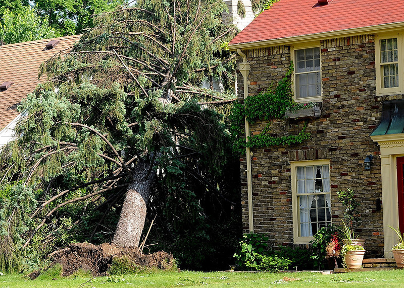 . A tree is uprooted in the Highland Park neighborhood of St. Paul. (Pioneer Press: Sherri LaRose-Chiglo)