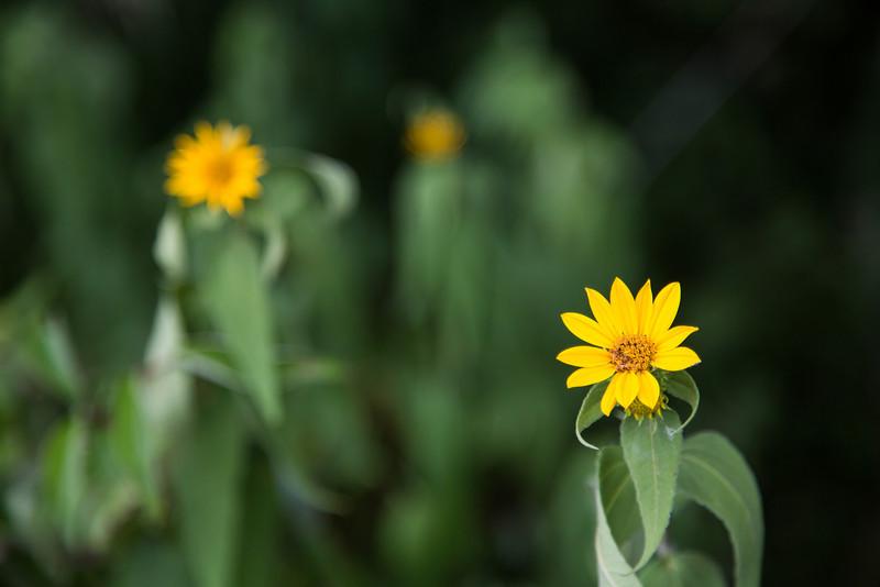 IMAGE: http://bobble.smugmug.com/Photography/2012/i-tbXLKwc/0/L/Park070812-39-L.jpg