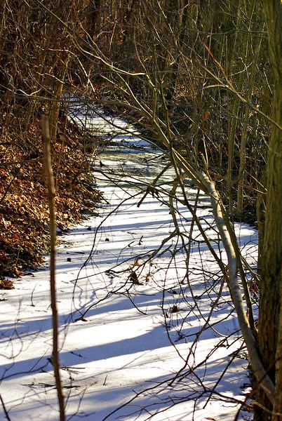 Frozen stream along the <br>Norman G. Wilder wildlife trail