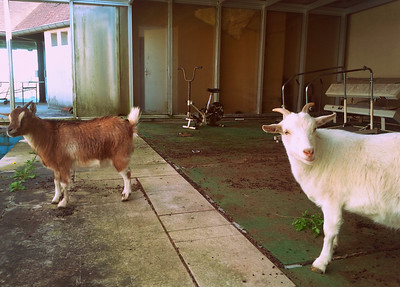 Goat pool project (04/2015)