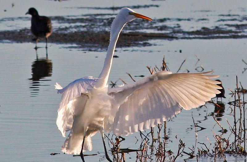 Egret Landing (Las Gallinas)