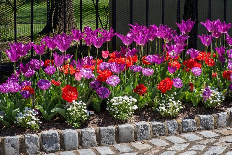 Garden 1, 090.jpg