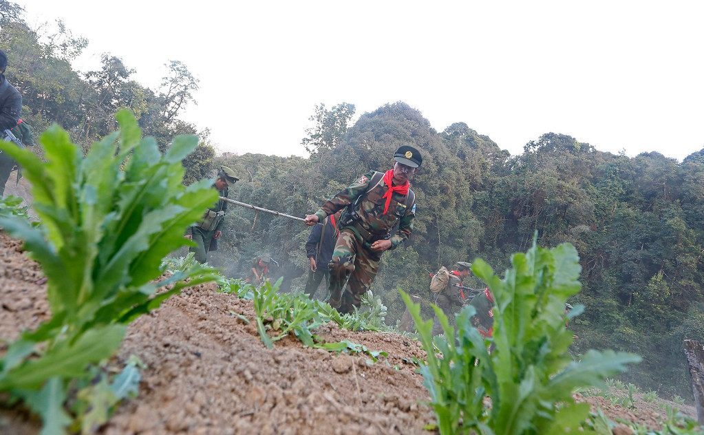 . Soldiers of the Ta-ang National Liberation Army (TNLA), one of the ethnic rebel groups, destroying a poppy field in Loi Mel Main village, Man Tone Township, Northern Shan State, Myanmar on Jan. 16, 2014. EPA/NYEIN CHAN NAING
