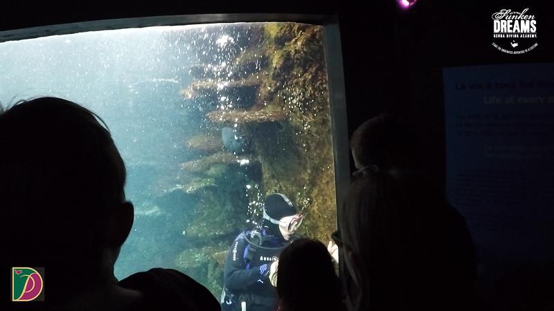 Expedition Pufferfish Day 4.00_15_16_14.Still042.jpg