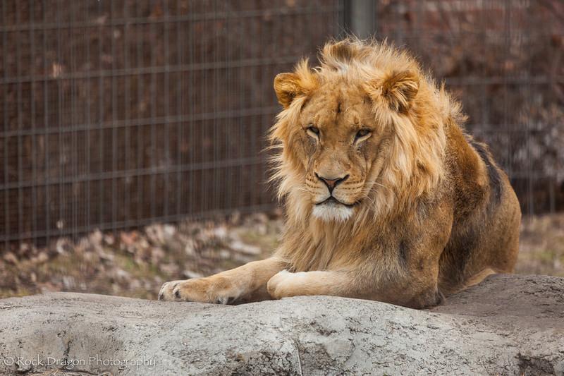 zoo_Apr_2013-9.jpg