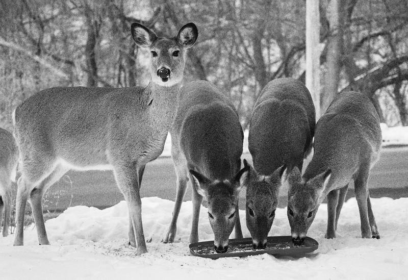 01-29-2021-deer-4.jpg