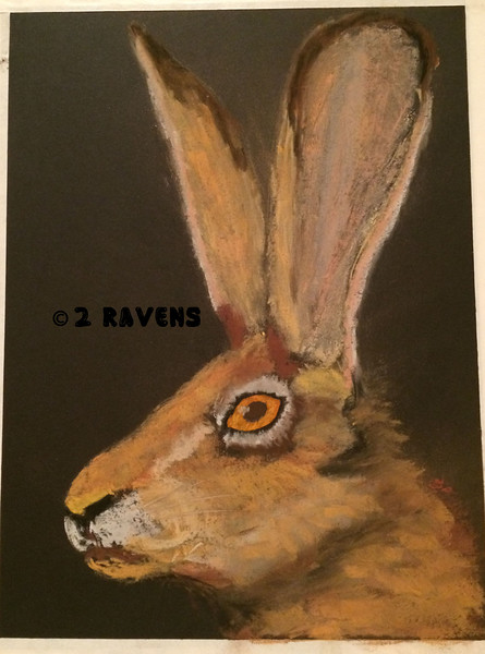pastel Black tailed Jack Rabbit, 11x14, SOLD