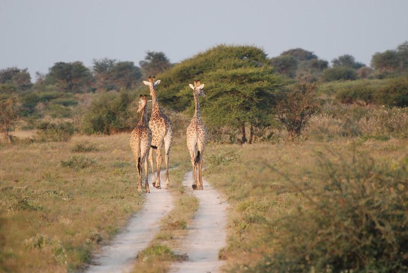 Botswana - Lesleigh Forsyth