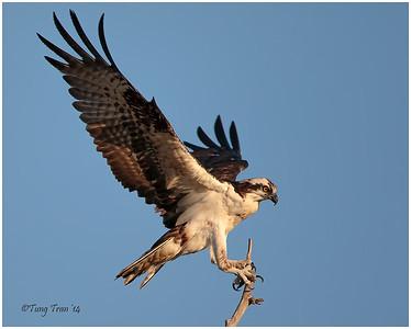 Bird Action 2014