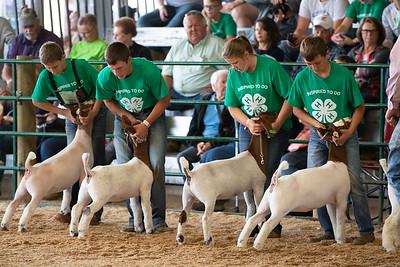 4-H Goats