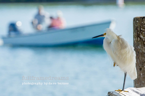 Boca Birds