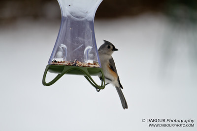 Backyard Bird Feeder 20110120