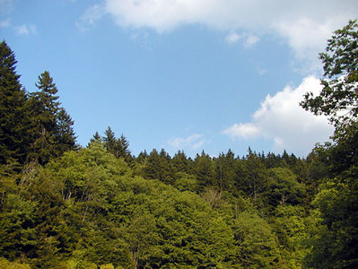Blue Skies and Sushine Today at Heintooga Balsam Mtn Road  GSMNP NC  6/17/07