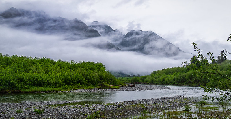 Mountains in Fog, Quinault River