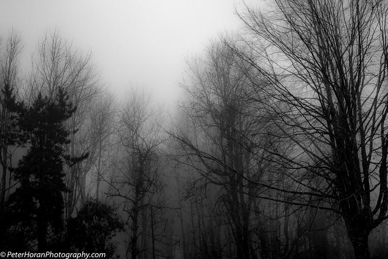 ghost-trees-405-of-14_50639269962_o.jpg