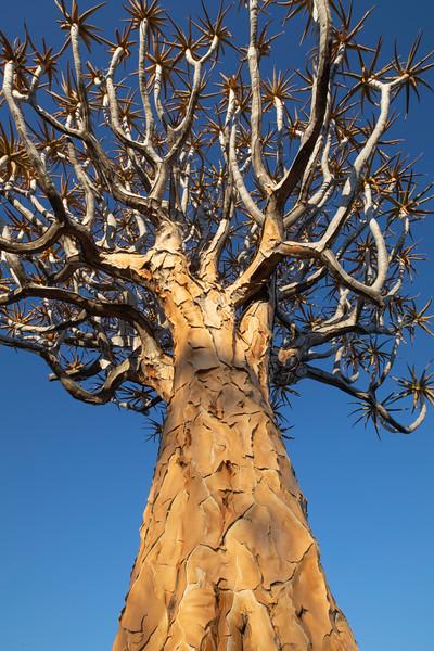 Namibia 69A3604.jpg